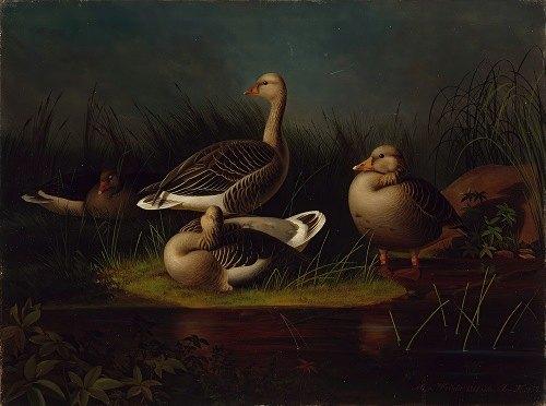 Greylag Geese, Copy After Ferdinand Von Wright (1866)