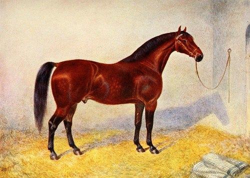 Cleveland Bay Stallion, Sultan