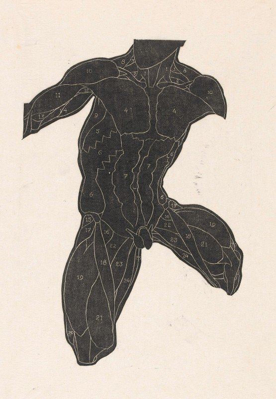 Reijer Stolk - Anatomical study of the neck, abdominal and thigh muscles of a man in silhouette