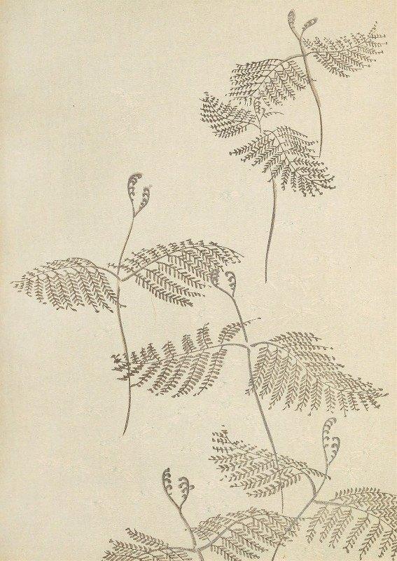 Korin Furuya (Editor) - Bijutsukai Pl.51