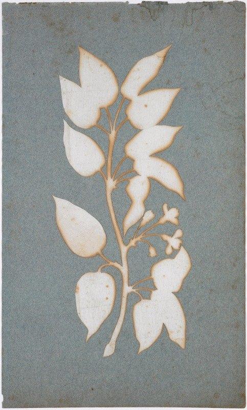 Phillipp Otto Runge - Blütenzweig (Wald-Geissblatt)