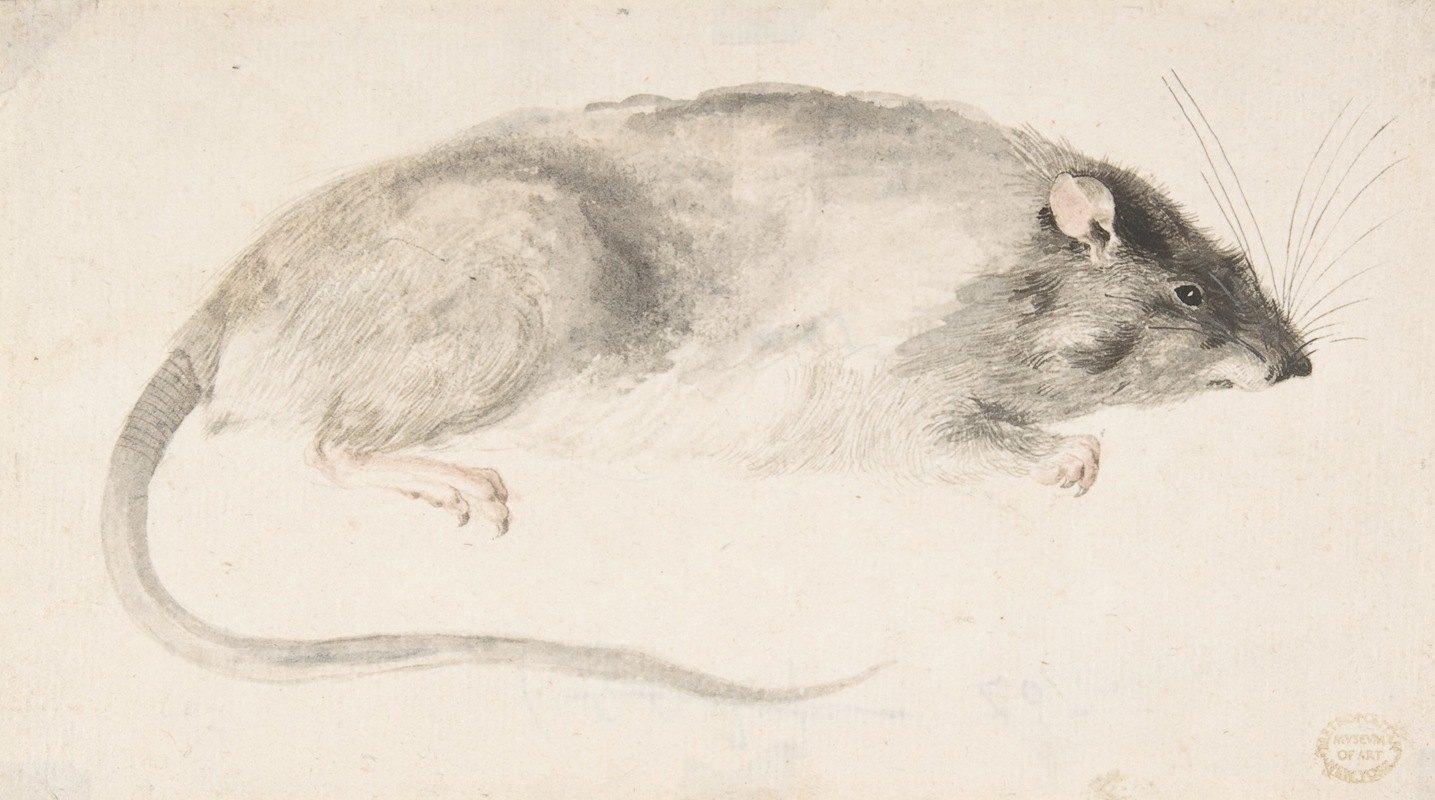 Count Giorgio Durante - A Rat Seen in Profile