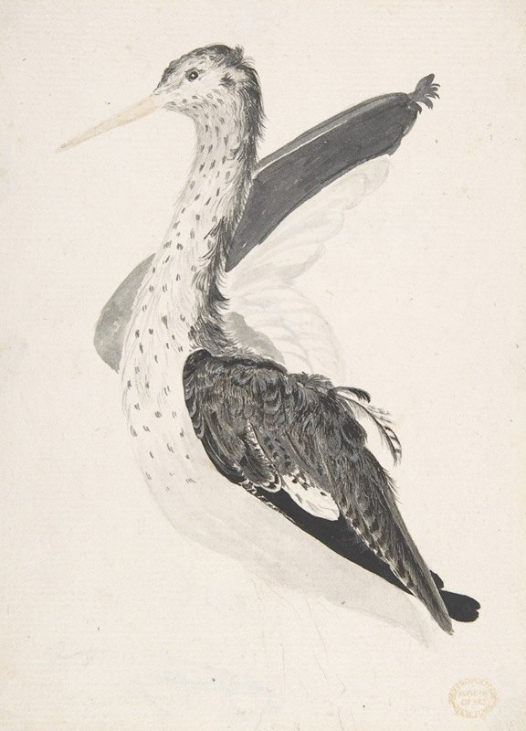 Count Giorgio Durante - Bird, Perhaps an Egret, Seen in Profile with One Wing Lifted