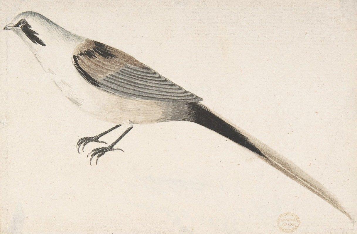 Count Giorgio Durante - Long-Tailed Bird Seen in Profile.