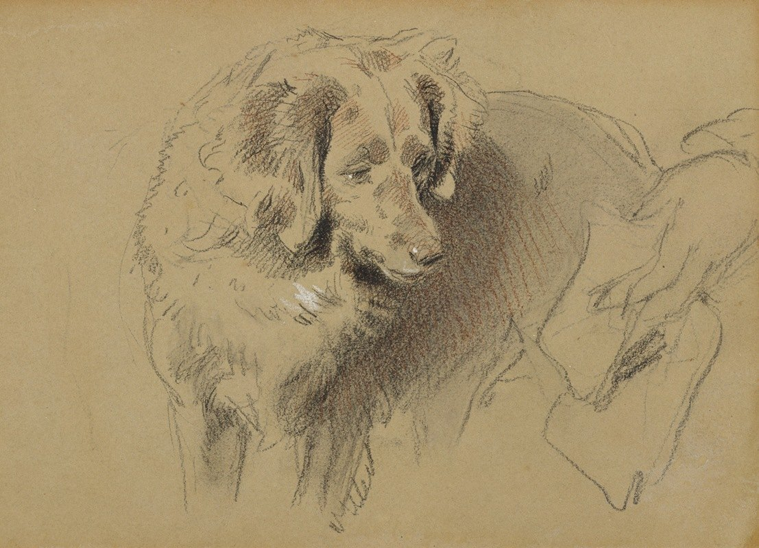 Sir Edwin Henry Landseer - Study of a Dog