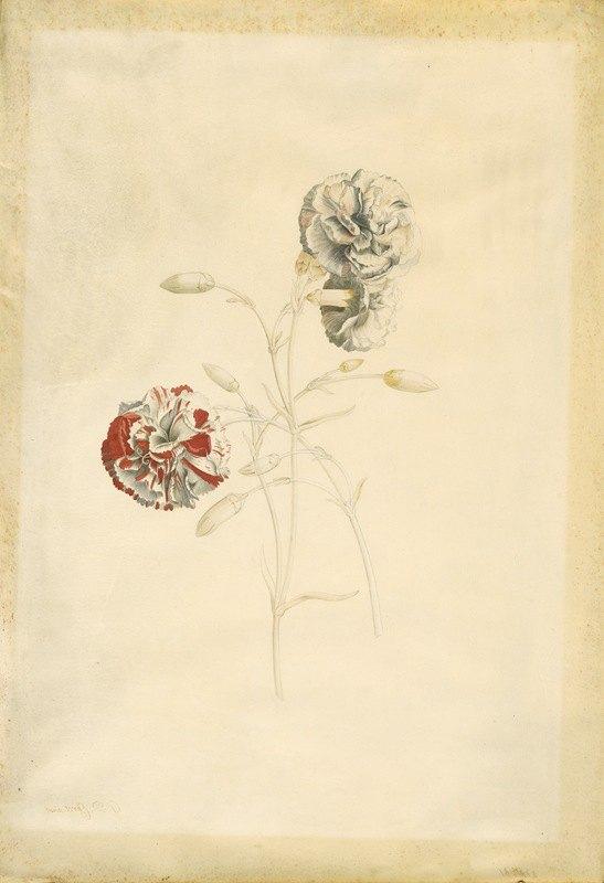 Georg Dionysius Ehret - Carnations
