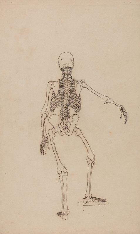 George Stubbs - Human Skeleton, Posterior View