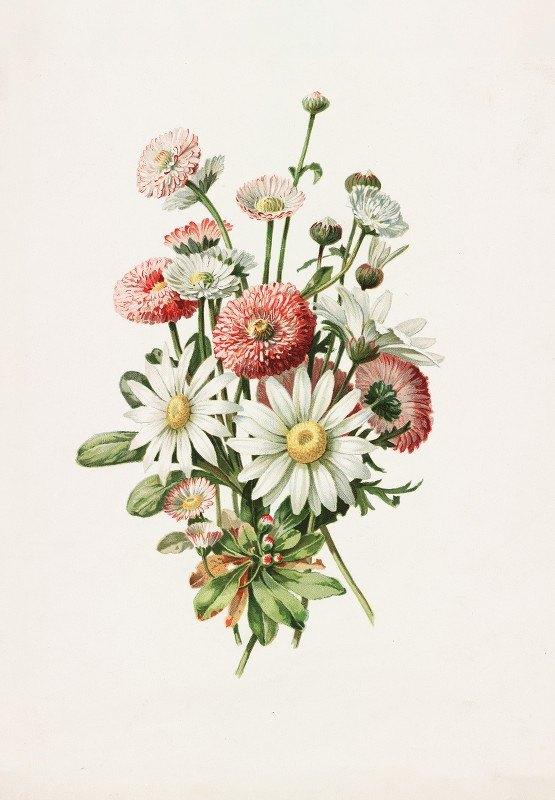 Alois Lunzer - Daisies