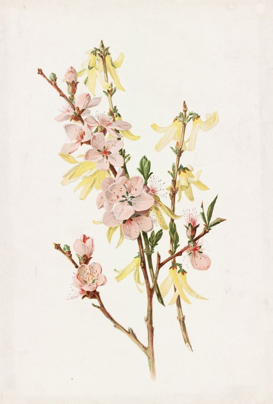 Alois Lunzer - Peach Blossoms and Forsythia