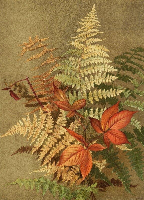 Ellen Fisher - Autumn Ferns