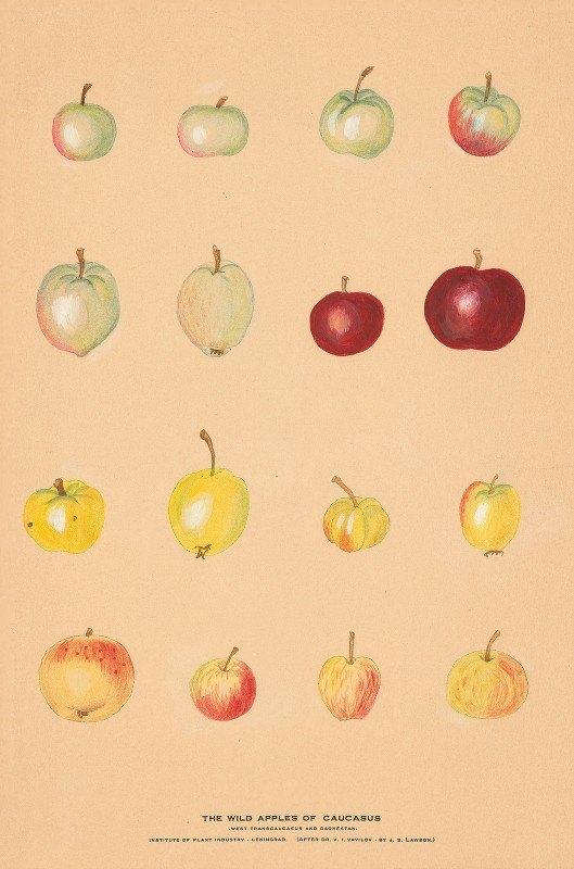 Nikolai Ivanovich Vavilov - The Wild Apples of Caucasus