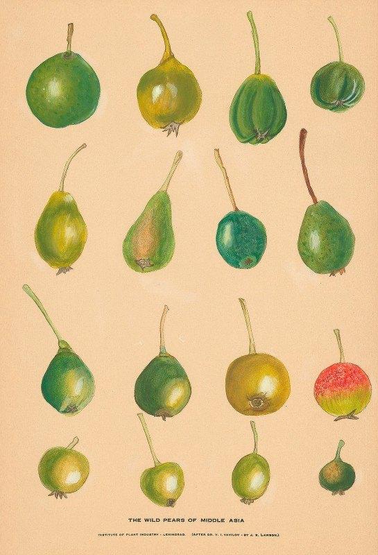 Nikolai Ivanovich Vavilov - The Wild Pears of Middle Asia
