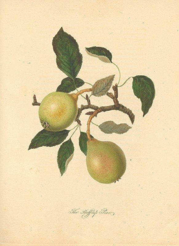 Thomas Andrew Knight - Huffcap Pear