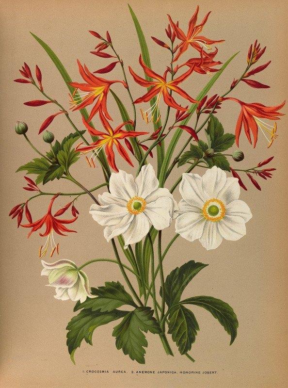 Arentine H. Arendsen - 1.Crocosmia Aurea. 2.Anemone Japonica. Honorine Jobert.
