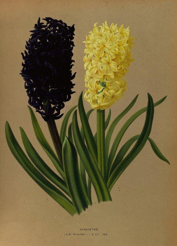 Arentine H. Arendsen - Hyacinths 2