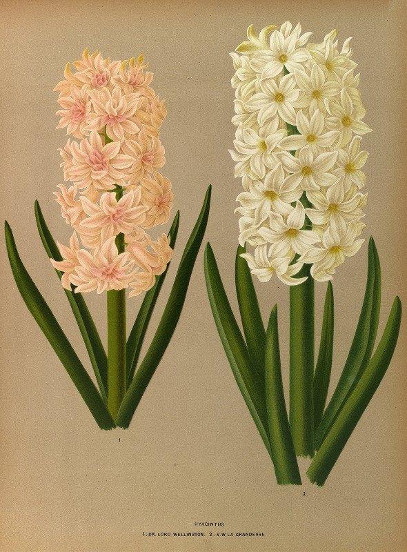Arentine H. Arendsen - Hyacinths 7