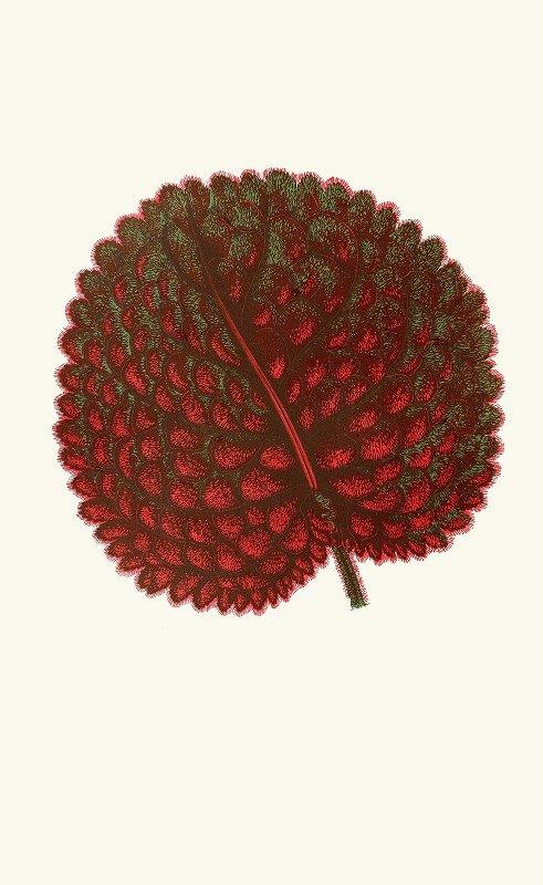 Edward Joseph Lowe - Gesneria Exoniensis