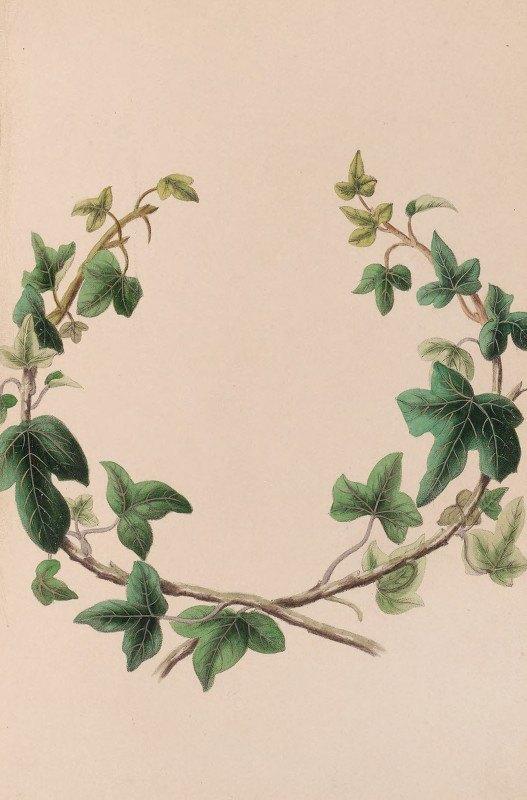 John Stevens Henslow - Wreath Of Ivy