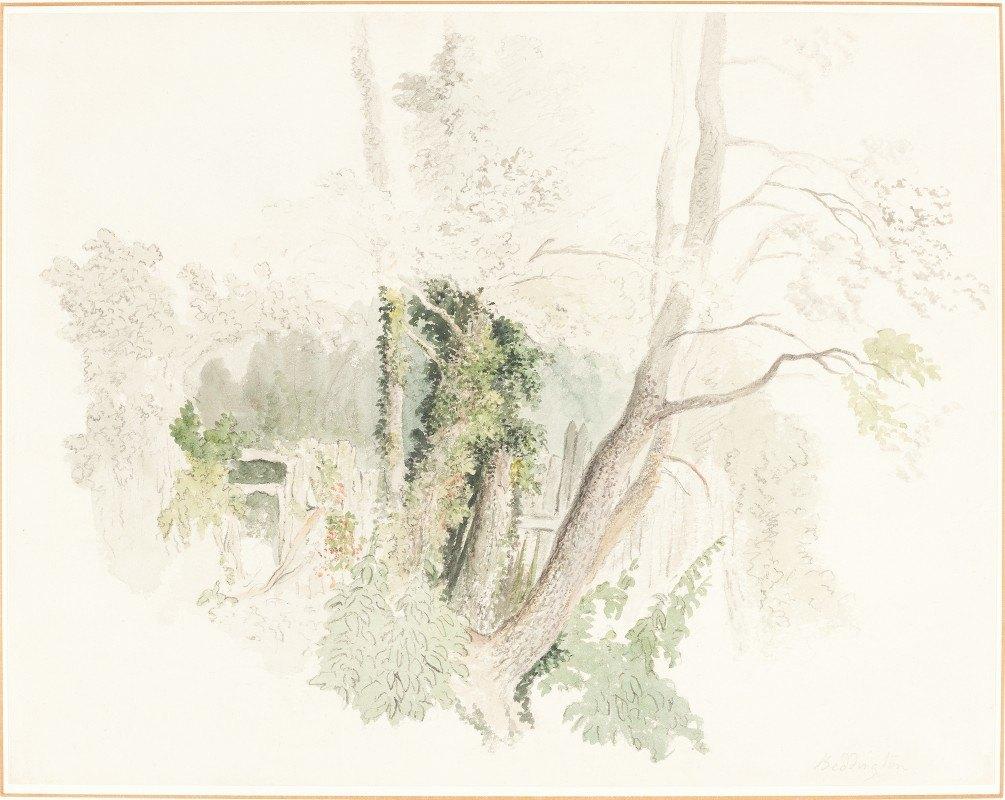 Robert Hills - Trees at Beddington