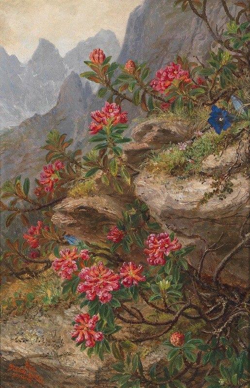 Anna Stainer-Knittel - Alpenblumen