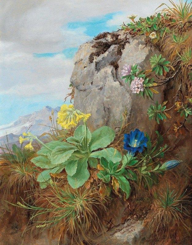 Anna Stainer-Knittel - Alpine Flowers