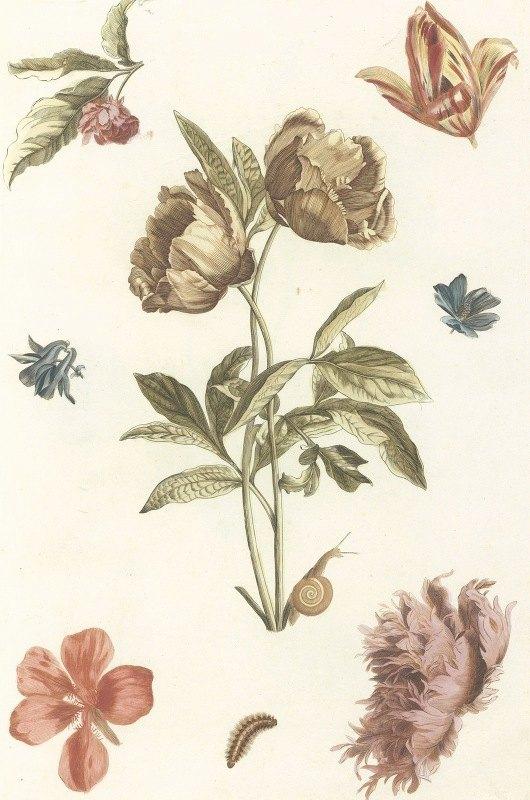 Anonymous - Verschillende bloemen en een rups