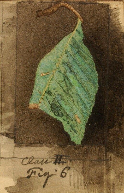 Emma Beach Thayer - Smaller Spotted Beach Leaf Edge Caterpillar