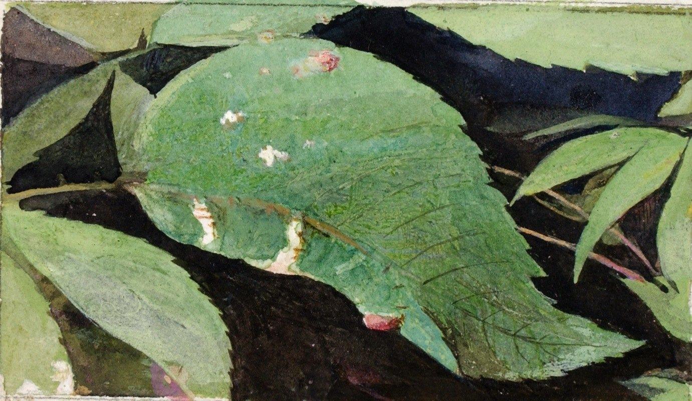 Emma Beach Thayer - White Birch Leaf Edge Caterpillar