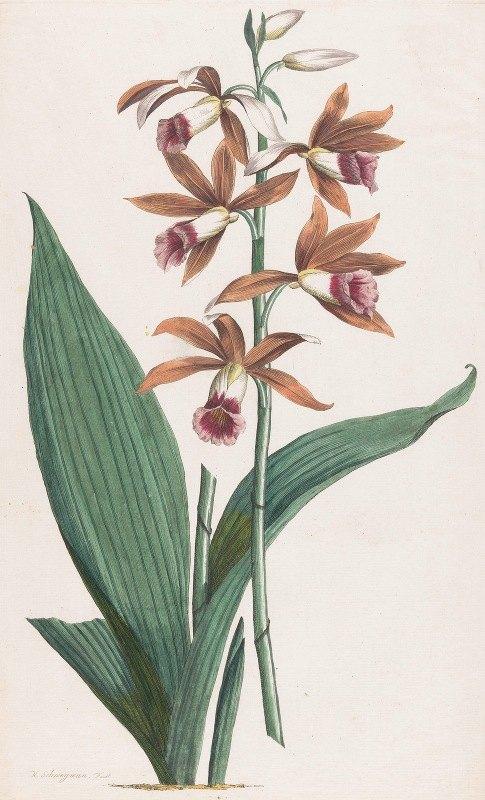 Hendrik Schwegman - Moerasorchidee