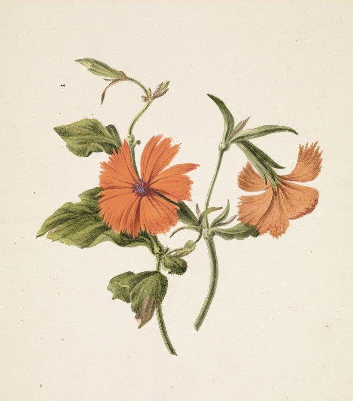 M. de Gijselaar - Gele Chinese roos (Rosa Chinensis Lutea)