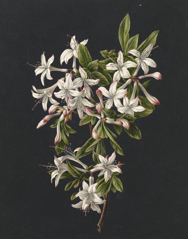 M. de Gijselaar - Tak van een bloeiende azalea
