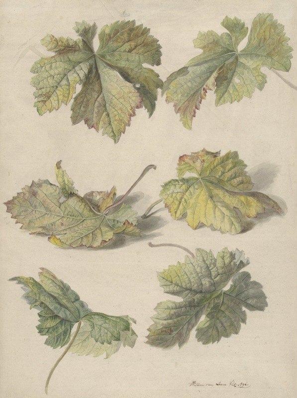 Willem van Leen - Studies van wingerdbladen