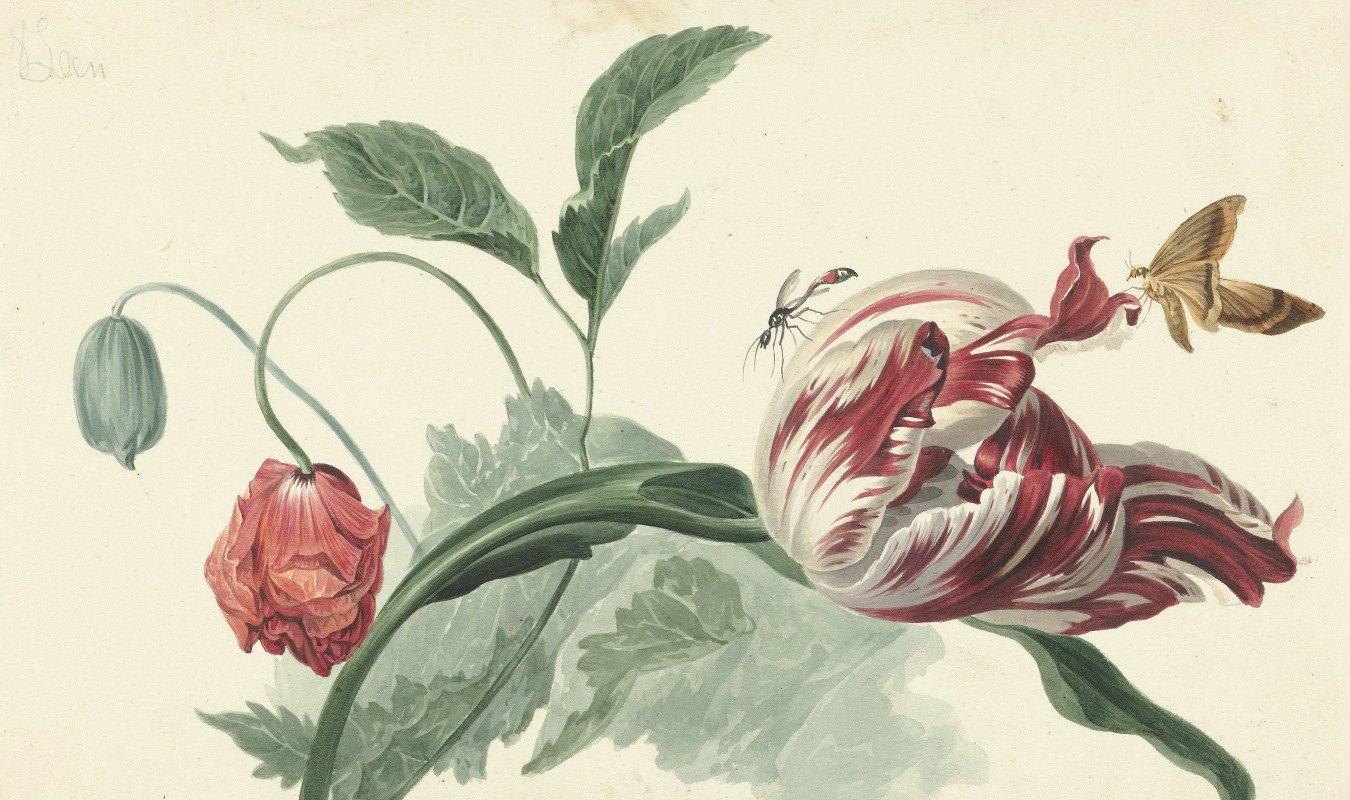 Willem van Leen - Tulip and a Poppy