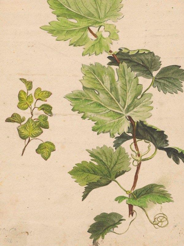 Henryka Beyer - Ivy twig and grapevine twig