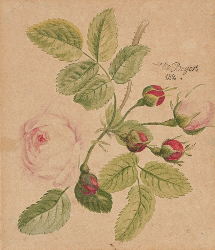 Henryka Beyer - Rose twig – rosa centifolia