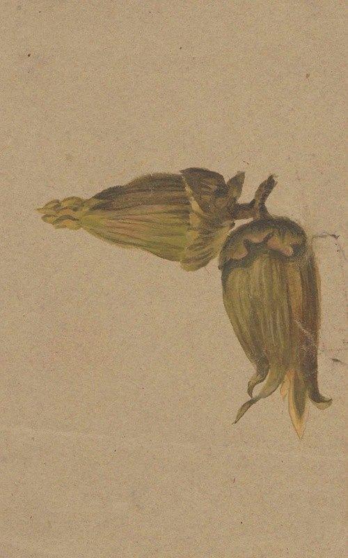 Henryka Beyer - Study of hazelnuts