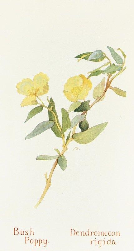 Margaret Armstrong - Bush Poppy