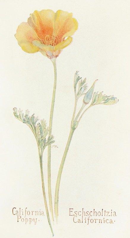 Margaret Armstrong - California Poppy