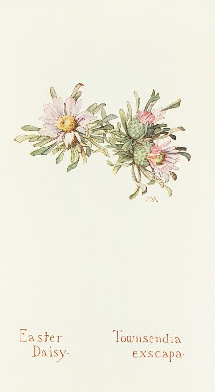Margaret Armstrong - Easter Daisy