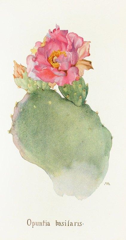 Margaret Armstrong - Opuntia basilaris