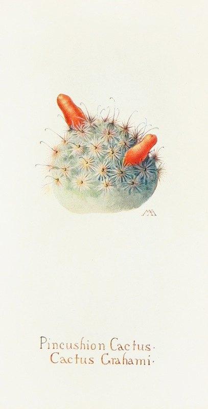 Margaret Armstrong - Pincushion Cactus