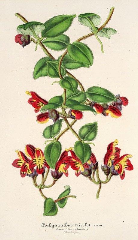 Charles Antoine Lemaire - Aeschynanthus tricoIor