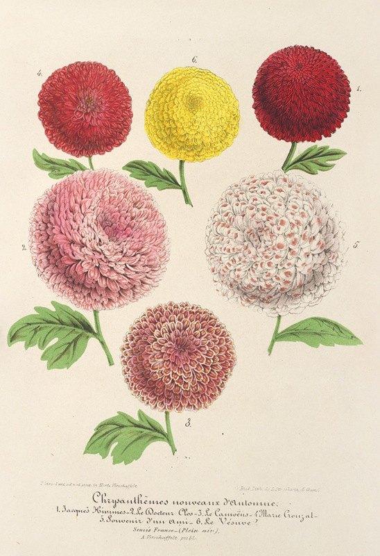 Charles Antoine Lemaire - Chrysanthèmes nains (nouveaux) d'Automne