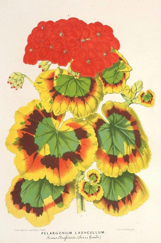 Charles Antoine Lemaire - Pelargonium zonale, var. Lady Collum