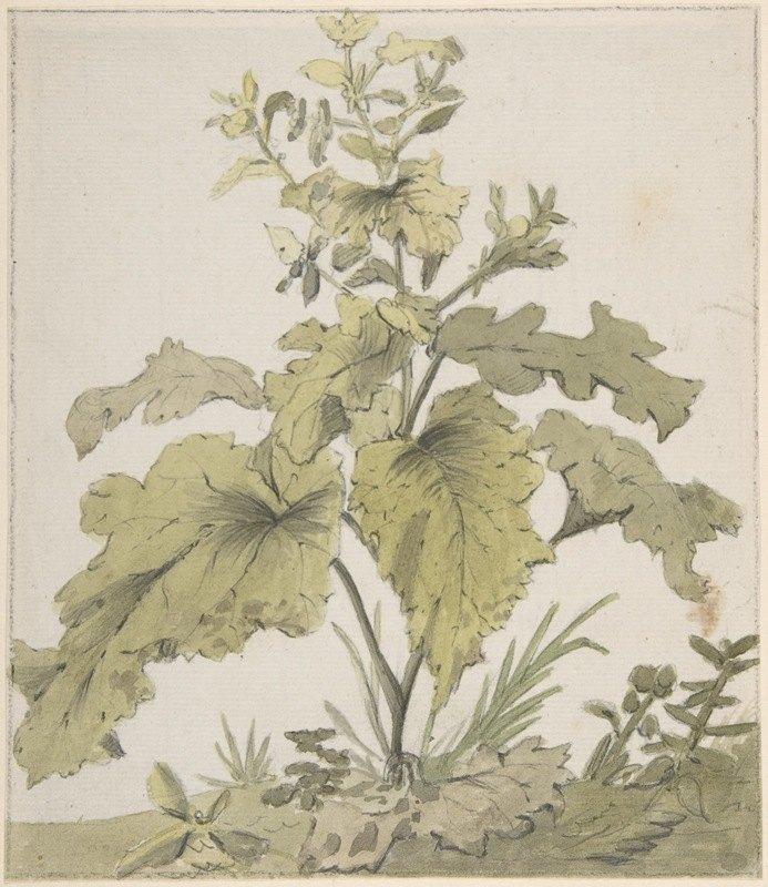 Christian Wilhelm Ernst Dietrich - Study of a Plant