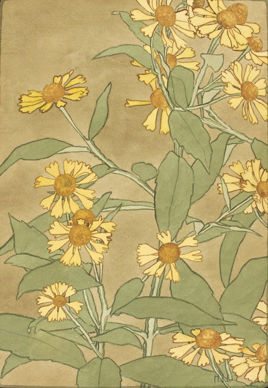 Hannah Borger Overbeck - Daisies with Orange Center and Yellow Petals