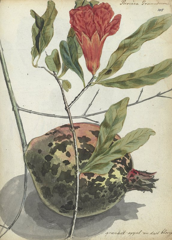 Jan Brandes - Pomegranate