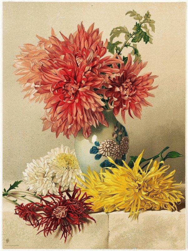 William Duffield - Chrysanthemums