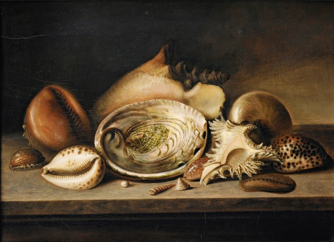Circle of Nicolaus Matthes - Tropical Sea Shells On A Stone Ledge, Including A Conch, A Giant Murex, Cowries And An Abalone