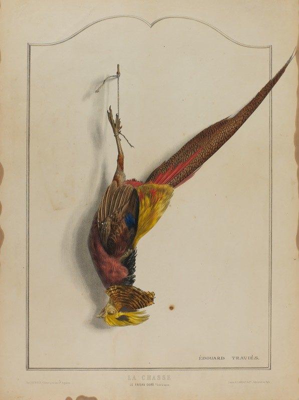 Édouard Traviès - La Chasse; Le Faisan Dore